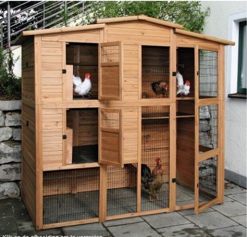 Elisa author at kippen houden for Acheter des plans de construction