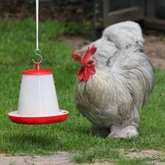 ophangset|kippenhouden